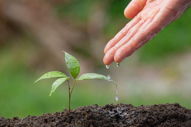 植物の苗木に水をまく手の写真をクローズアップ