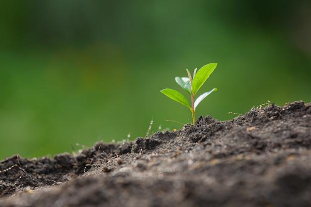 植物の苗木のクローズアップ写真が成長しています