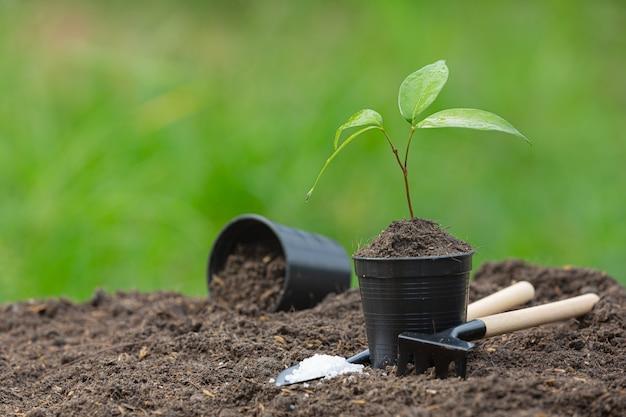 Крупным планом изображение саженца растения растет