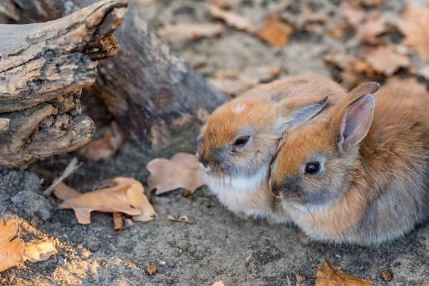 2匹の若いかわいいウサギのクローズアップ写真