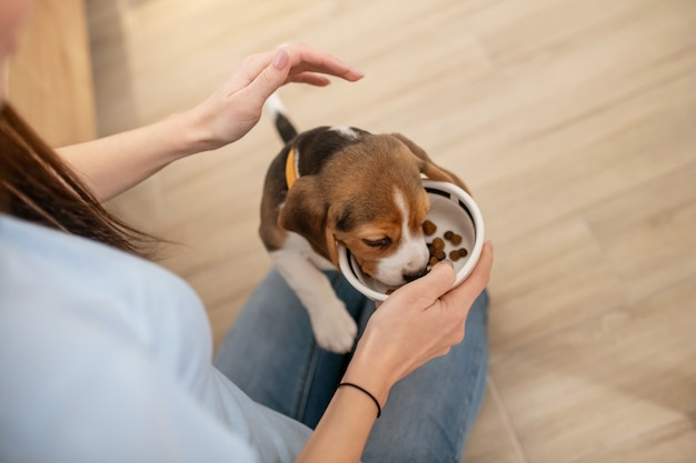 A close up picture of a puppy eating from a plate