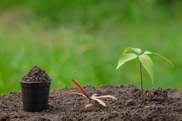 L'immagine ravvicinata dell'alberello della pianta sta crescendo