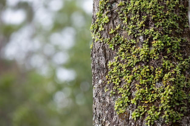 Close up picture of trunk of fresh tree