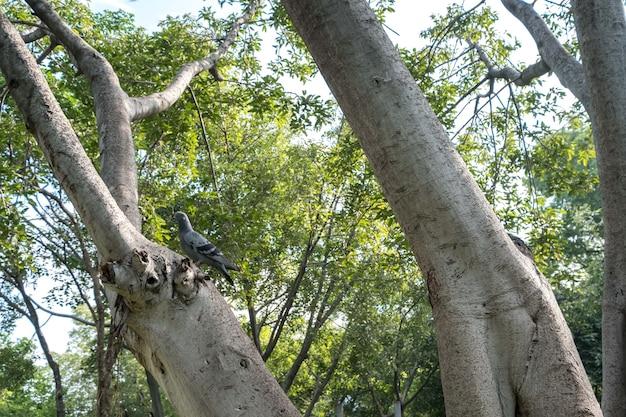 Close up of a pigeon bird on tree
