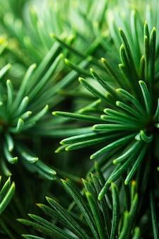 클로즈업 소나무 나무 가지