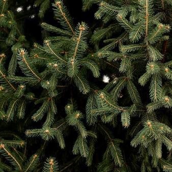 Close-up di pino