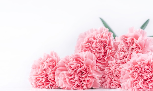 Close up of pink carnation on white background for mother's day flower Premium Photo