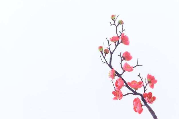 Закройте вверх по ветке розовой вишни на белом фоне