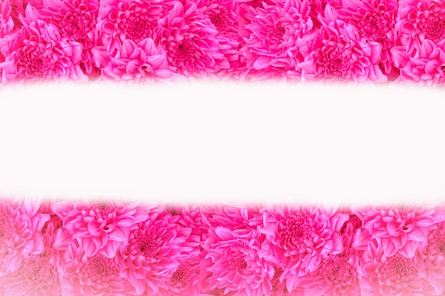Close up pink flowers background