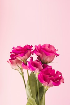 Close-up of pink flowers on pastel colored background