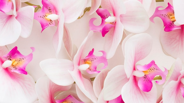 Close-up pink orchids