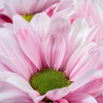 Close-up petali rosa macro natura