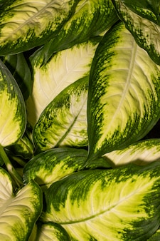 Close-up of plant leaves with colored edges