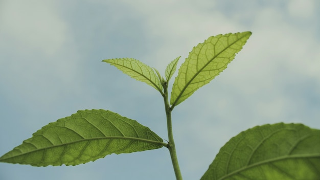 Close-up of plant leaves
