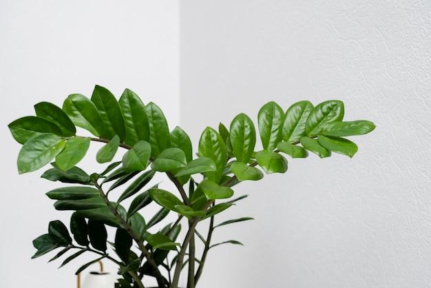 식물 잎을 닫습니다