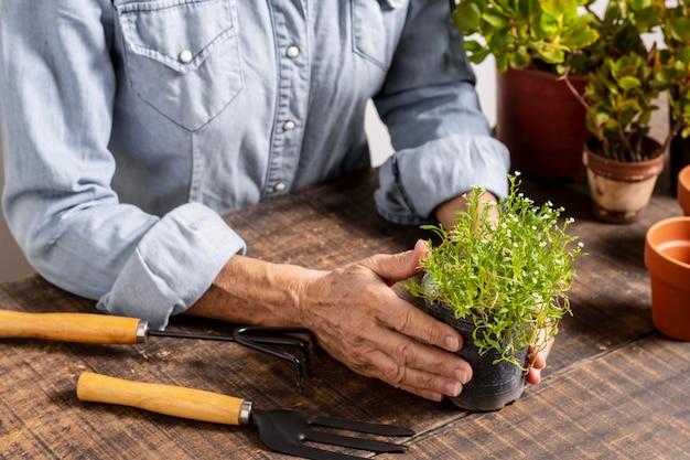 ポットに花を植えるクローズアップ