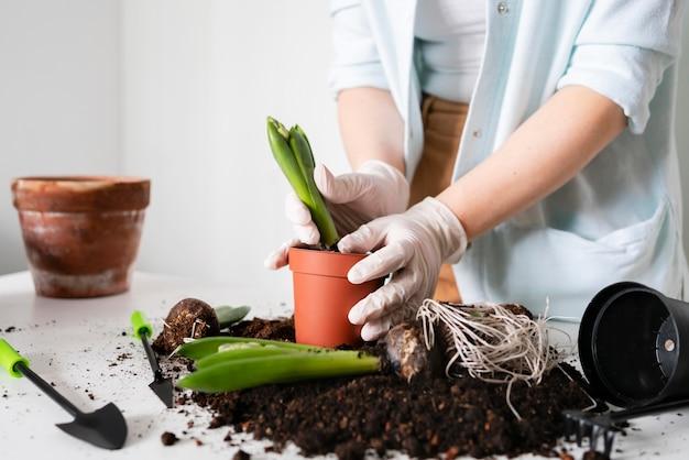 Закройте вверх по посадке луковицы растения в почву