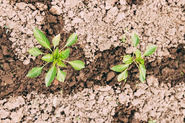 湿った土壌のクローズアップ植物