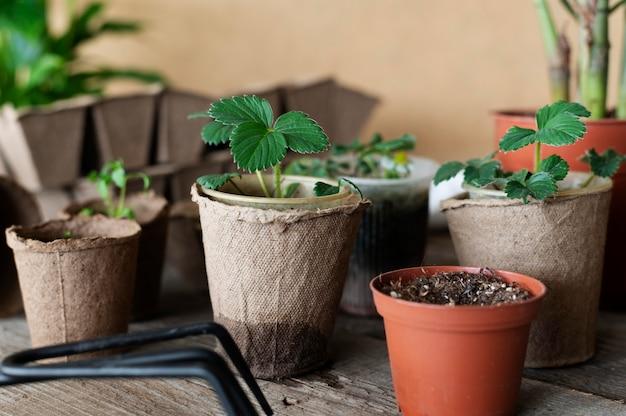 植物の苗をクローズアップ