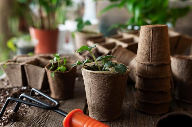 식물 모종을 닫습니다