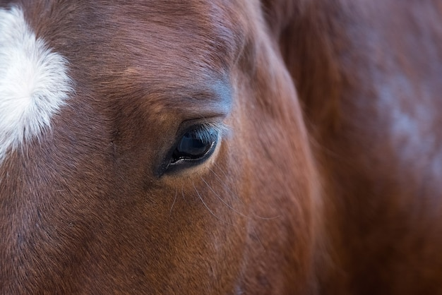 Close up portrait of beautiful wild brown horse eye.