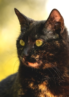 Close-up portrait of a cute stray kitty, homeless animals concept photo