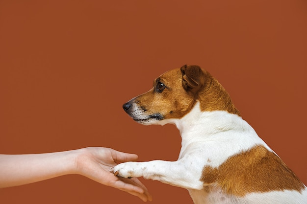 Close-up portrait of a dog gives paw to man.