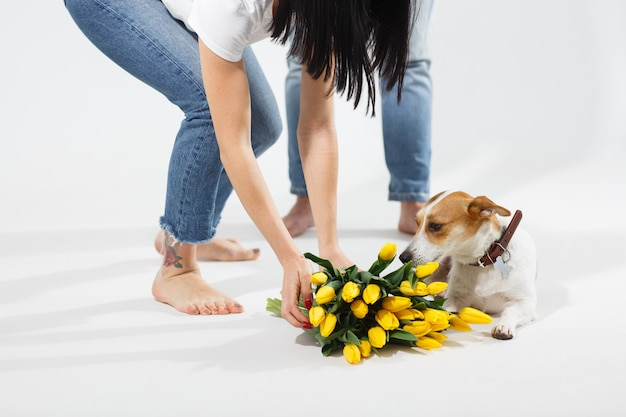 Close up portrait of dog with yellow flowers  with lovely couple behind. celebrating valentine , woman's day. happy jack russell dog with flowers. horizontal photo.