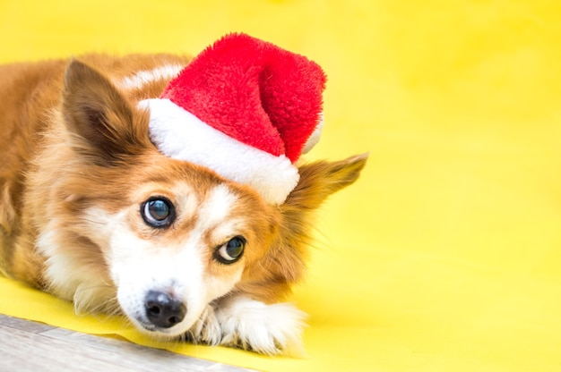Close-up portrait of a dog on a yellow surface wearing a santa claus hat. new year 2021