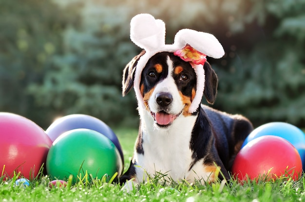 Close-up portrait of a happy dog in easter rabbit ears