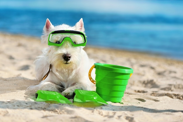 Close-up portrait of a little dog wearing diving mask and flippers