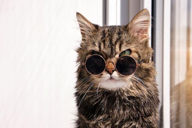 화창한 따뜻한 날에 창턱에 앉아 작은 어두운 선글라스에 사랑스럽고 솜털 회색 고양이의 초상화를 닫습니다