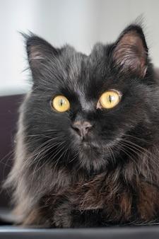 Крупным планом портрет черной кошки с желтыми глазами, отдыхая дома.