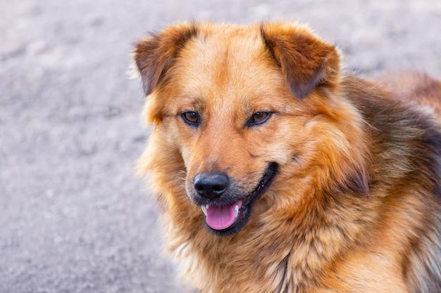 茶色の毛むくじゃらの犬のクローズ アップの肖像画