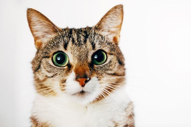 Макро портрет кошки на белом