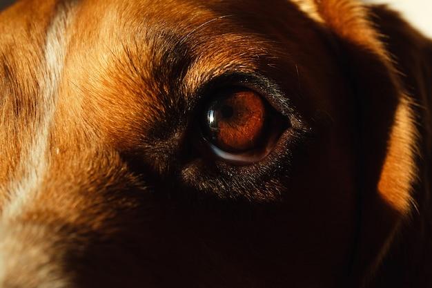 犬のベッドに座っている犬のクローズアップの肖像画