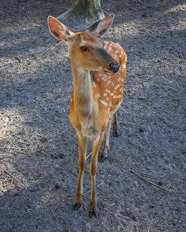 女性の斑点を付けられた鹿の肖像画をクローズアップ