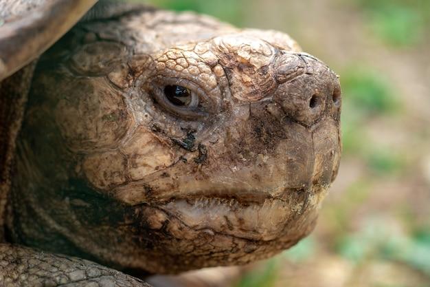Крупным планом портрет черепахи