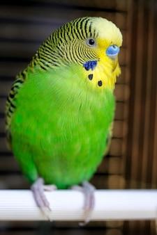 鳥かごのとまり木に座っているカラフルなgeenオウムの肖像画をクローズアップ