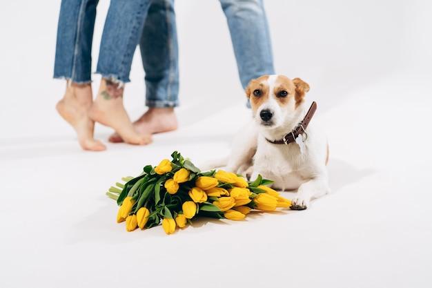 Закройте вверх по портрету собаки с желтыми цветками изолированной на белой предпосылке с симпатичными парами позади. празднование валентина, женский день. любовь и концепция счастливой семьи.