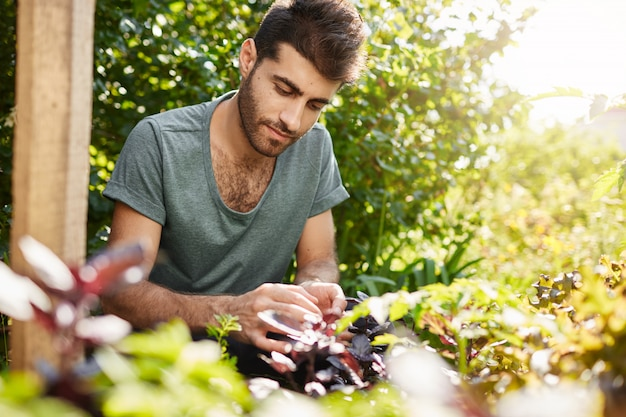 夏の暑い日に彼の田舎の庭で働いて集中して青いtシャツの若いハンサムな白人男性の肖像画を間近します。野菜を植える日を過ごす庭師。