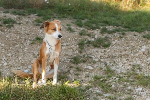 Крупным планом портрет молодой рыжеватой дворняги сидит собака