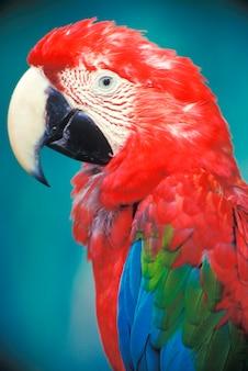Close up portrait of parrot