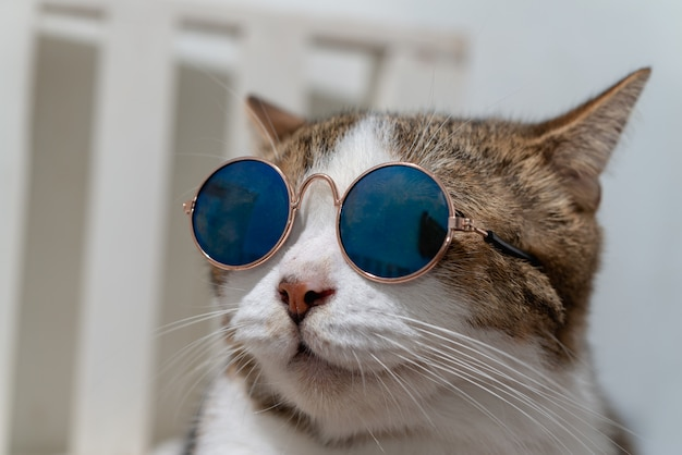 Close up portrait photo of short hair cat wearing sunglasses.