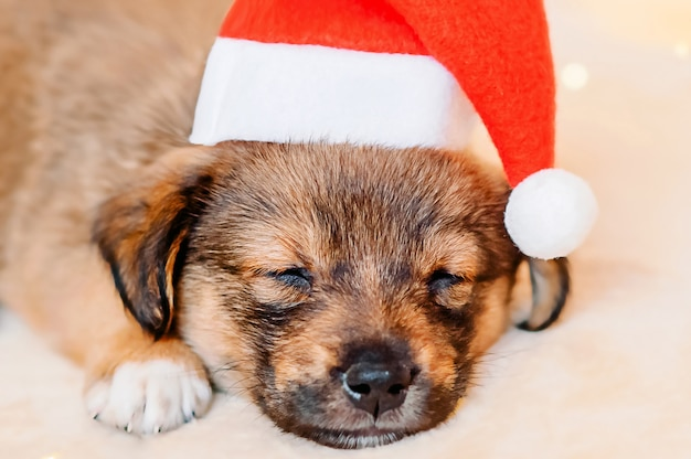 Close-up portrait of a sleeping puppy wearing a santa hat