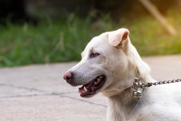 Close up portrait of a stray dog on side walk,vagrant dog