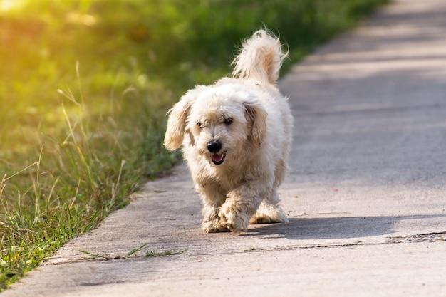 Close up portrait of a stray dog on sidewalk, vagrant dog