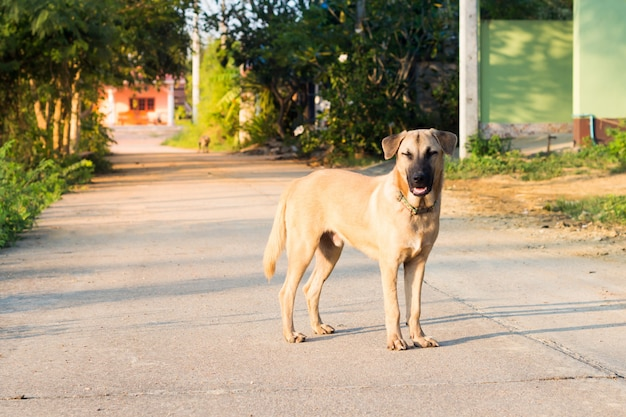 Close up portrait of a stray dog,vagrant dog