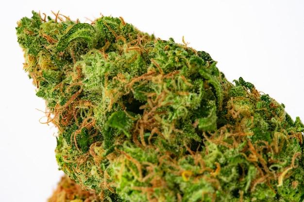흰색 배경에 처방 의료 마리화나 꽃 봉오리를 닫습니다