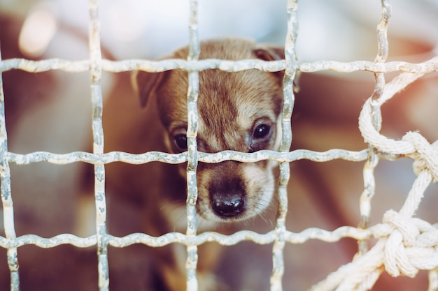 Close up a puppy stray dog, alone life waiting for food. abandoned homeless stray dog is lying in the foundation. little sad abandoned dog in cage.